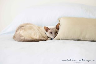 Milly and Simon family images 2016 -142