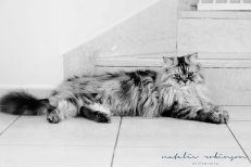 Milly and Simon family images 2016 -291